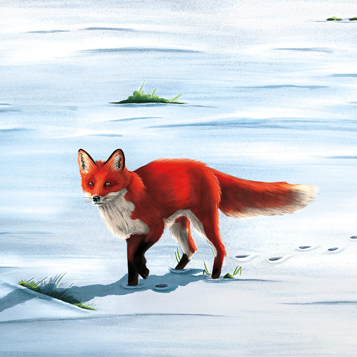 An image of an illustration of a red fox walking in the snow.